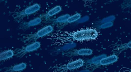 100뉴스,백뉴스,노인,시니오,뚱보균,피르미쿠테스,건강,박테로이데테스,식단관리,살